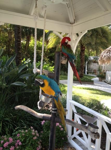 parrots, The Palms, South Beach