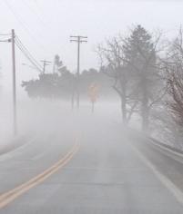 Fog 1