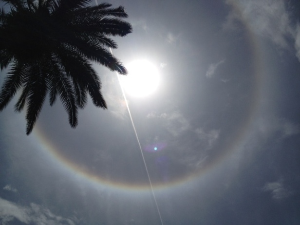 eye in the sky w palm tree and contrail