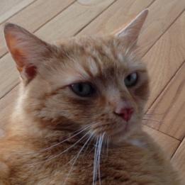Ginger 5