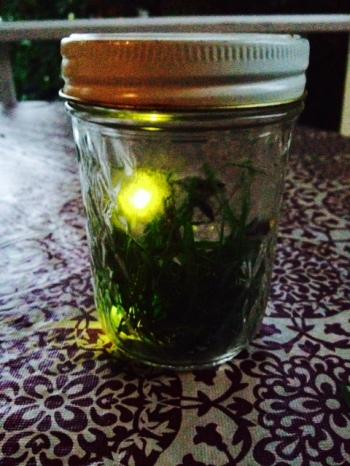 Lightning (bugs) in a bottle