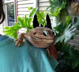 Reggie as Toothless