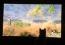 cats, kittens, watching TV, stalking prey