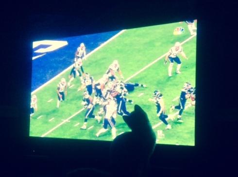 cats, kittens, monday morning quarterbacking