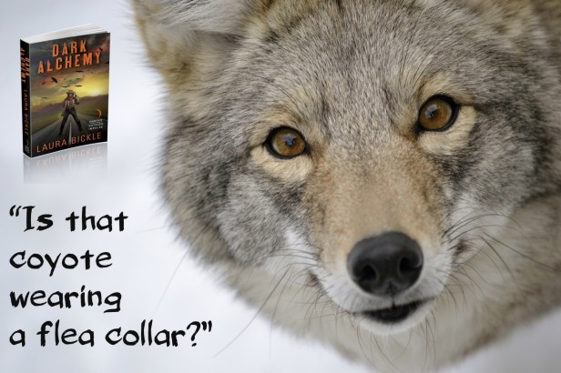 Laura Bickle Coyote Teaser