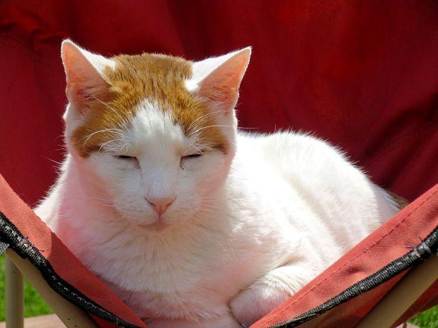 Anna Durand Cat