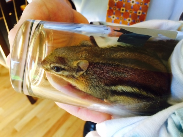 What does a chipmunk have to do with writing or workshops? Absolutely nothing. We caught this little guy (girl?) in our house earlier this week. No idea how it got in, which is somewhat disturbing. Not that I would have wanted them to go after it, but my cats showed zero interest. We let it go in the backyard.