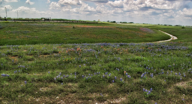 Terry Spear bluebonnets and Indian paintbrush