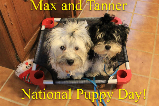 Terry Spear Max Tanner National Puppy Day