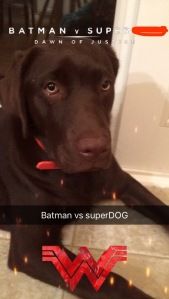 Batman v Superdog