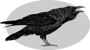 nd-jones-raven